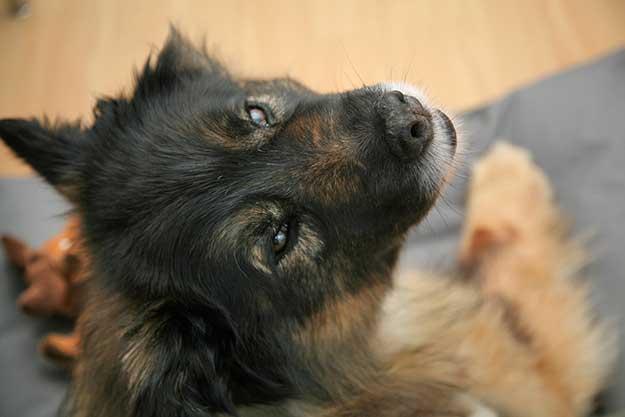 Unser-Immobilienbuero-Hund Teddy